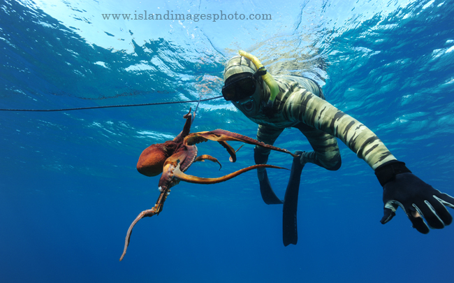 Snorkling, Free diving, Skin diving – the key differences ...